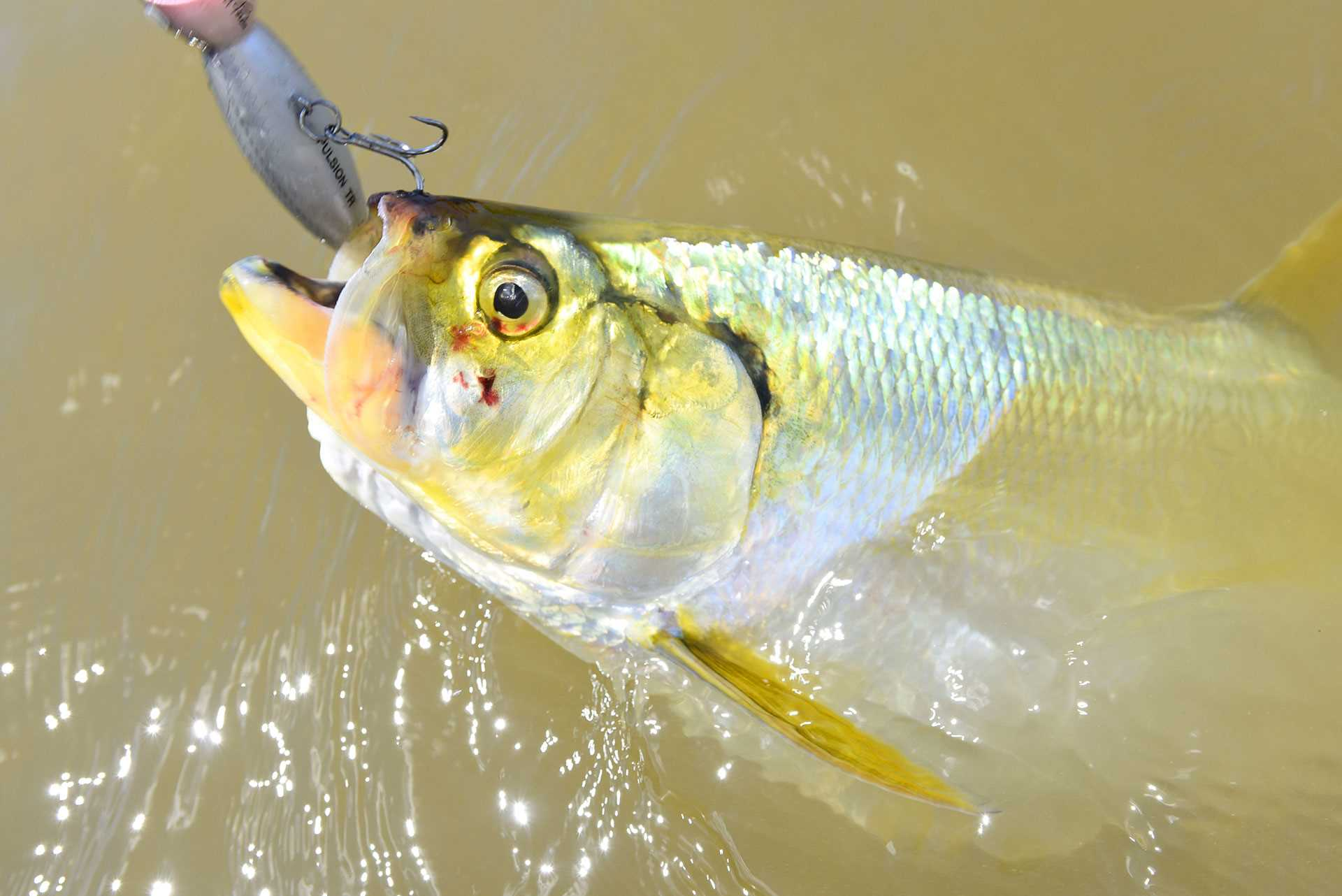 Amazonie Gal Pac Voyages de pêche