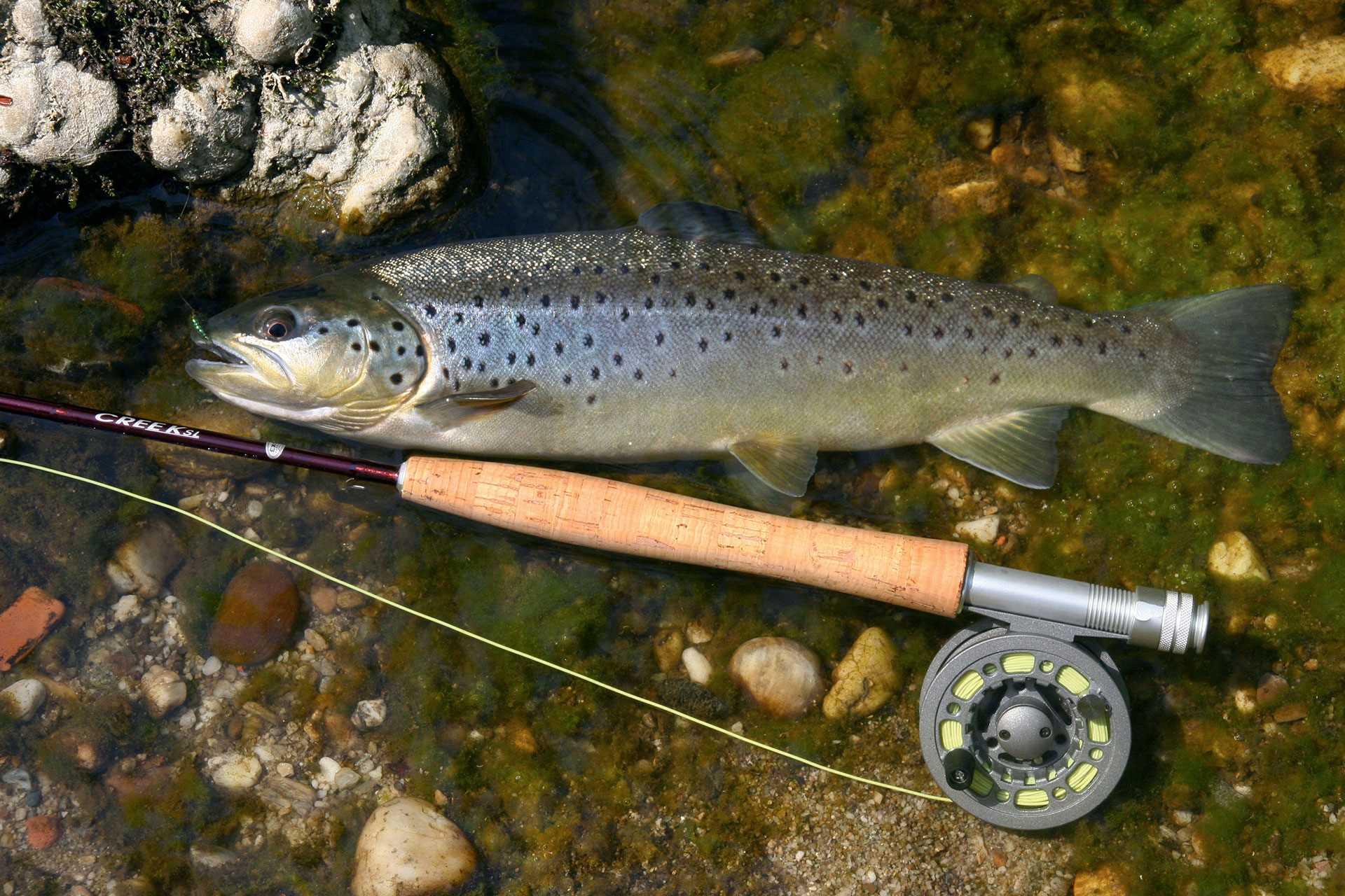 Autriche Gal Pac Voyages de pêche
