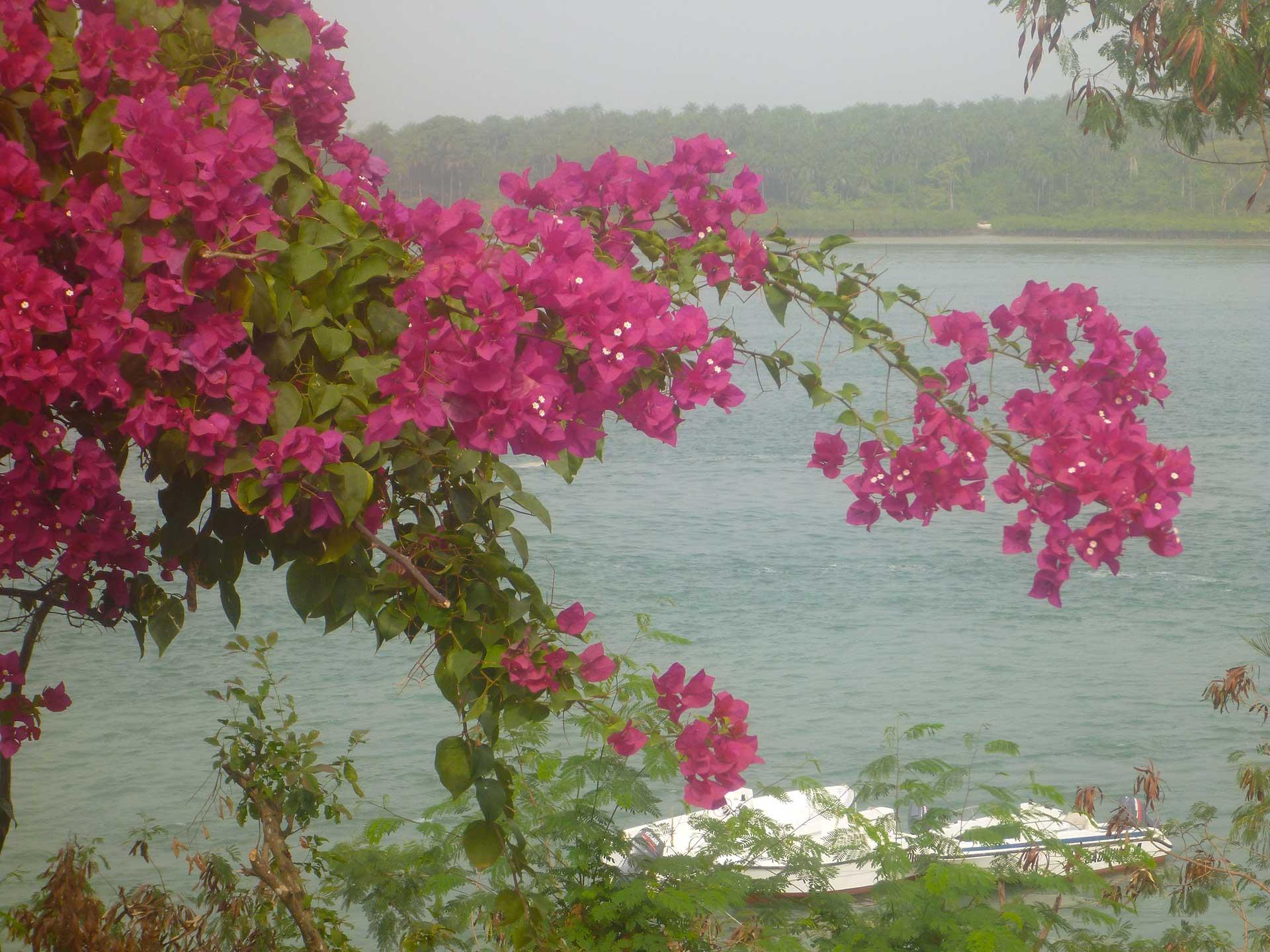 Guinée Gam Pac Voyages de pêche