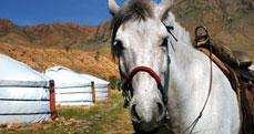 Mongolie - peche nomade 3